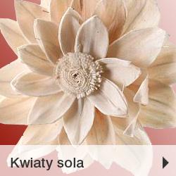 Kwiaty sola PROMOCJA 30%